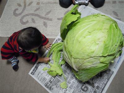 cabbage_101029.jpg