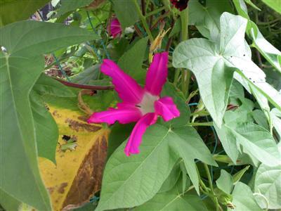 flower_100820.jpg